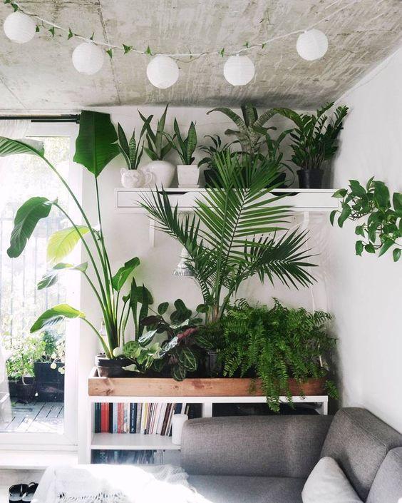 ירוק בבית